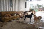 chillende honden