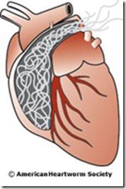 heartpicbig3