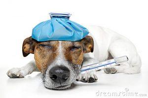 zieke-hond-23266147